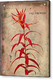 Fireweed Acrylic Print