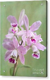 Five Beautiful Pink Orchids Acrylic Print by Sabrina L Ryan