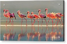 Flamingo Acrylic Print by Phillip Chang