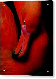 Flamingo Rose Acrylic Print by DerekTXFactor Creative