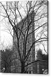 Flat Iron Tree Acrylic Print