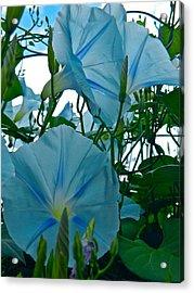 Floral Fantasy Acrylic Print by Randy Rosenberger