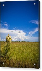 Florida Flat Land Acrylic Print by Marvin Spates