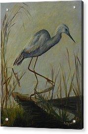 Florida Native Bird On A Fall Morning Acrylic Print