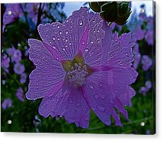 Flower After Rain Acrylic Print