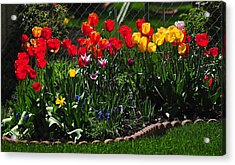 Flower Garden Acrylic Print by Frozen in Time Fine Art Photography