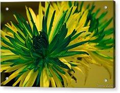 Flower Acrylic Print by Jennifer Burley