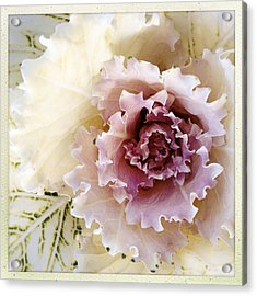 Flower Acrylic Print by Les Cunliffe