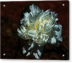 Flower Acrylic Print by Ludwig Keck