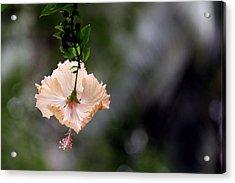 Flower Acrylic Print by Sanjeewa Marasinghe