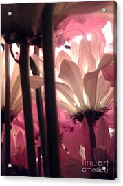 Flowerlife2 Acrylic Print by Susan Townsend