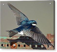 Flying Acrylic Print