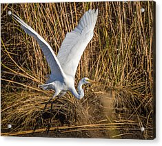 Flying White Egret Acrylic Print