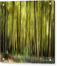 Forest Acrylic Print by Bernard Jaubert