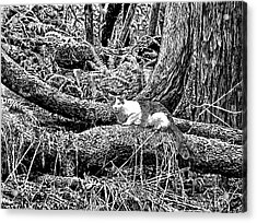 Forest Cat Acrylic Print by Artellus Artworks