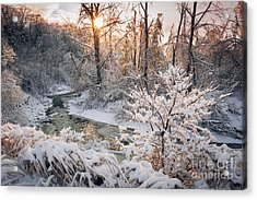 Forest Creek After Winter Storm Acrylic Print by Elena Elisseeva