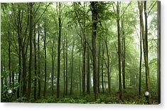 Forest... Acrylic Print