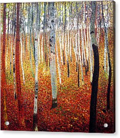 Forest Of Beech Trees Acrylic Print