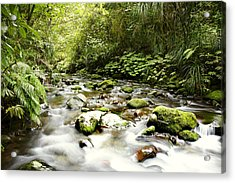 Forest Stream Acrylic Print by Les Cunliffe