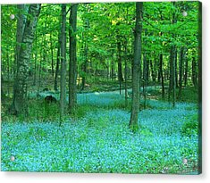 Forget-me-nots In Peninsula State Park Acrylic Print