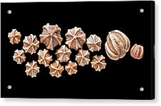 Fossil Blastoids Acrylic Print by Natural History Museum, London