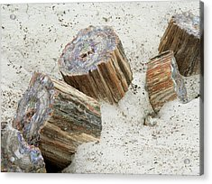 Fossilised Trees In Petrified Forest National Park Acrylic Print by Simon Fraser/science Photo Library