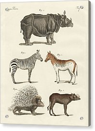 Four-footed Animals Acrylic Print by Splendid Art Prints