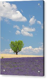 France, View Of Lavender Field With Tree Acrylic Print by Westend61