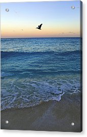Free Bird Acrylic Print by Skip Hunt