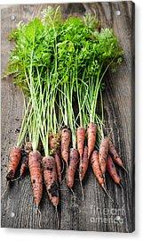 Fresh Carrots From Garden Acrylic Print by Elena Elisseeva