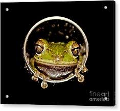 Acrylic Print featuring the photograph Frog by Olga Hamilton