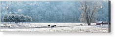 Frosty Morning Acrylic Print by Bill Wakeley