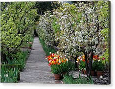 Acrylic Print featuring the photograph Garden by Haleh Mahbod