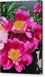 Garden Party Acrylic Print by Billie Colson
