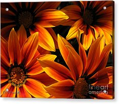 Acrylic Print featuring the photograph Gazania Named Kiss Orange Flame by J McCombie