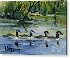 Geese In A Row Aceo Acrylic Print by Virginia Potter