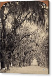 Acrylic Print featuring the painting Georgia Oak Trees, C1887 by Granger
