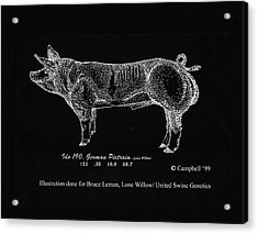 Acrylic Print featuring the drawing German Pietrain Boar by Larry Campbell