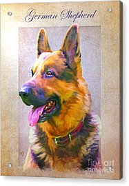 German Shepherd Portrait Acrylic Print by Iain McDonald