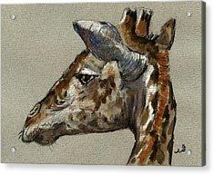 Giraffe Head Study Acrylic Print