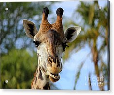 Acrylic Print featuring the photograph Giraffe by Lisa L Silva