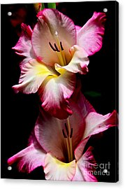 Gladiolus Beauty Acrylic Print by Eve Spring