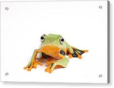 Gliding Frog Acrylic Print by Scott Linstead