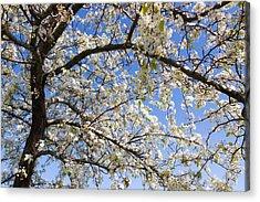 Glimpse Of Spring Acrylic Print by Heidi Smith