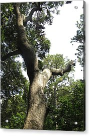 Acrylic Print featuring the photograph Gnarled Tree 2 by Cathy Lindsey