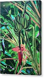 Going Bananas Acrylic Print