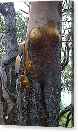Acrylic Print featuring the photograph Going Bi Way? by Marie Neder