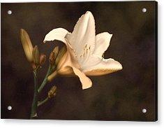 Golden Daylily Acrylic Print by Tom Mc Nemar