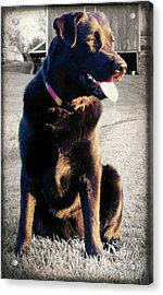 Golden Girl Acrylic Print by Andrea Dale