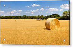 Golden Harvest Acrylic Print by Roger Gallamore